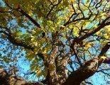 Blätter fallen